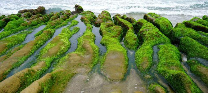 緑のベルベット絨毯が広がるビーチ「老梅石槽」 Laomei Green Reef, New Taipei, Taiwan