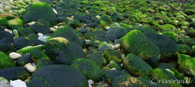 超穴場!北海道広尾町にある一面アオノリの緑の海岸! Hokkaido, Japan