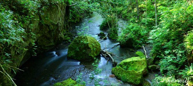 神秘の苔の「ガロー」第1弾:樽前ガロー Hokkaido, Japan