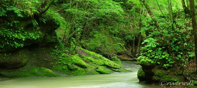 神秘の苔の「ガロー」第2弾:カンカンガロー Hokkaido, Japan
