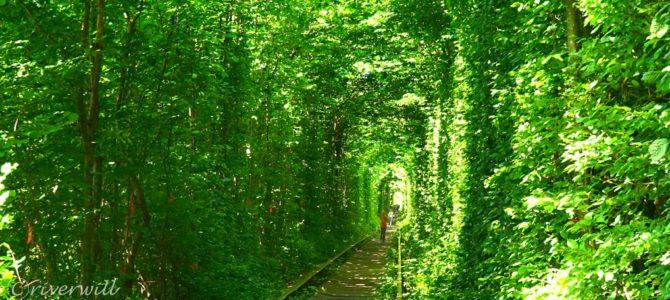 一度は見たい!ウクライナ恋人の聖地「愛のトンネル」 Rivne, Ukraine