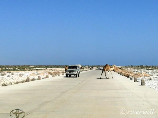ソコトラ島 Socotra island, Yemen