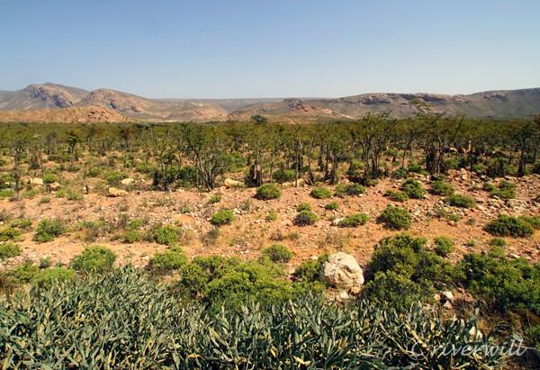 カランシア村(ソコトラ島)Qalansiah village,  Socotra island, Yemen