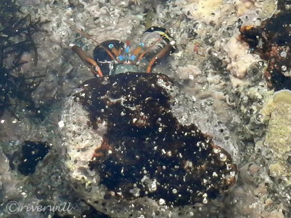 ディハムリ海洋自然保護区(ソコトラ島)Dihamri Marine Protected Area, Socotra island, Yemen