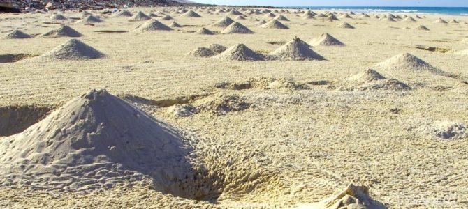 インド洋のガラパゴス!秘境ソコトラ島の旅~第7日目 ホック洞窟とアリヘル・ビーチ 後編 Socotora, Yemen