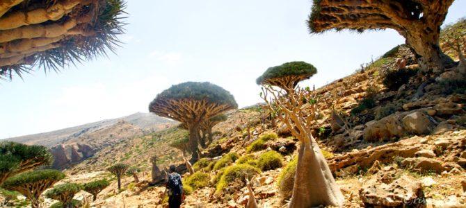 インド洋のガラパゴス!秘境ソコトラ島の旅~第8日目 ホムヒル・プールと首都ハディボ 中編 Socotora, Yemen