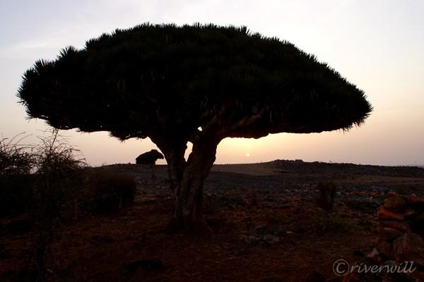 ディクサム台地 Dixam Plateau in Socotra island, Yemen